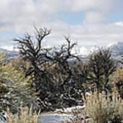 Sagebrush And Snow Poster