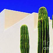 Saguaros  Poster