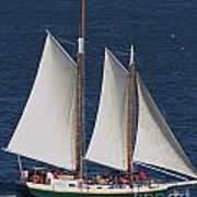Sailboat In The San Francisco Bay . 7d7900 Poster