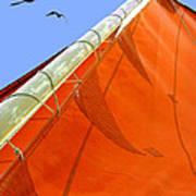 Sails Five Poster by Kathleen Horner