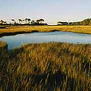 Salt Marsh, Assateague Island, Virginia Poster