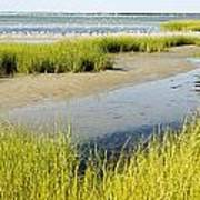 Salt Marsh Habitat With Flock Of Birds Poster