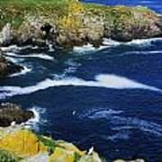 Saltee Islands, Co Wexford, Ireland Poster
