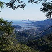 San Francisco As Seen Through The Redwoods On Mt Tamalpais Poster