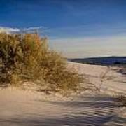 Sand Shrub 1 Poster