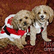 Santa Puppies Poster