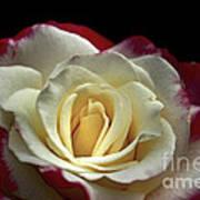 Sarah's Rose Poster