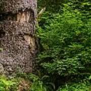 Sasquatch Rubbing Tree Poster
