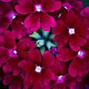 Scarlet Bouquet  Poster