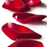 Scattered Rose Petals Poster