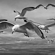 Sea Gull Scavengers Poster