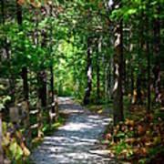 Scenic Pathway Poster