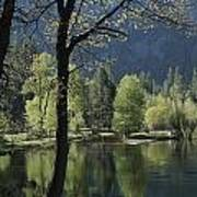 Scenic View Of The Merced River Poster
