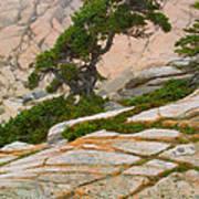 Schoodic Cliffs Poster