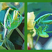 Science Class Diptych - Praying Mantis Poster by Steve Ohlsen
