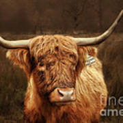 Scottish Moo Coo - Scottish Highland Cattle Poster by Christine Till