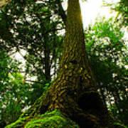 Screaming Tree Poster by Kamil Swiatek