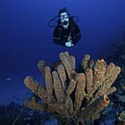 Scuba Diver Swims Underwater Amongst Poster