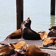 Sea Lions At Pier 39 San Francisco California . 7d14314 Poster