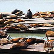 Sea Lions At Pier 39 San Francisco California . 7d14316 Poster