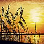 Sea Oat Sunrise Poster