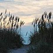 Sea Oats At Sunset Poster