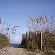 Sea Oats Line The Path Poster