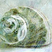 Sea Shell I Poster