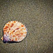 Sea Shell Poster