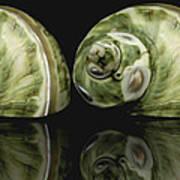 Sea Shells Photography Still Life Poster