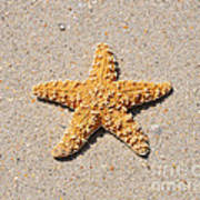 Sea Star Poster