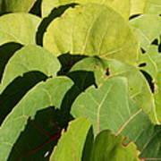 Seagrape Leaf Layer Poster