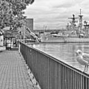 Seagull At The Naval And Military Park Poster