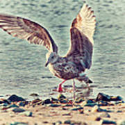 Seagull Flaps Poster