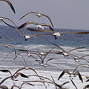 Seagulls Fly Over Surf Poster