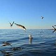 Seagulls Over Lake Michigan Poster