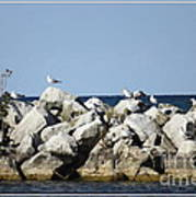 Seaguls On Boulders In Lake Erie Poster