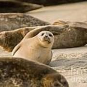 Seal 4 Poster