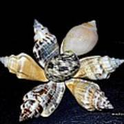 Seashell Floral Poster