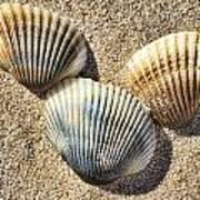 Seashells V2 Poster