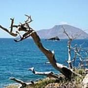 Seaside Tree Poster
