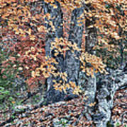 Season Change At Lost Maples Poster
