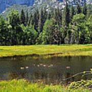 Seasonal Duck Pond Poster