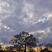 Sedgeley Tree Poster