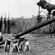 See-saw Dog Poster by Fox Photos