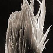Sem Of A Damaged Human Head Hair With A Split End Poster