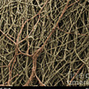 Sem Of Mycelium On Mushrooms Poster