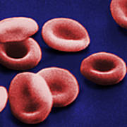 Sem Of Red Blood Cells Poster by Omikron