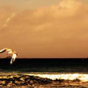 Sennen Seagull Poster