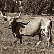 Sepia Longhorn Cow Poster